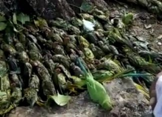 500 birds were killed by hail during a powerful hailstorm in India on February 12 2018, 500 birds were killed by hail during a powerful hailstorm in India on February 12 2018 pictures, 500 birds were killed by hail during a powerful hailstorm in India on February 12 2018 video