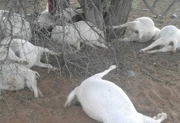 lightning kills animals namibia south africa