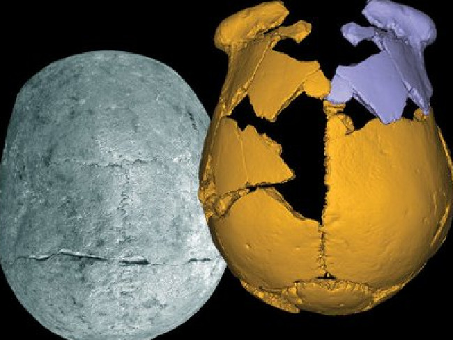 Denisovan, Denisovan skulls china, skulls mysterious ancient Denisovans, Two ancient skulls found in China , human hybrid skull china, skull human hybrid unearthed in china