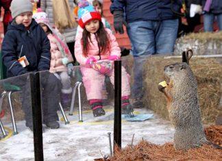 winter prediction groundhog 2018, Groundhog Day 2018: Punxsutawney Phil has seen his shadow