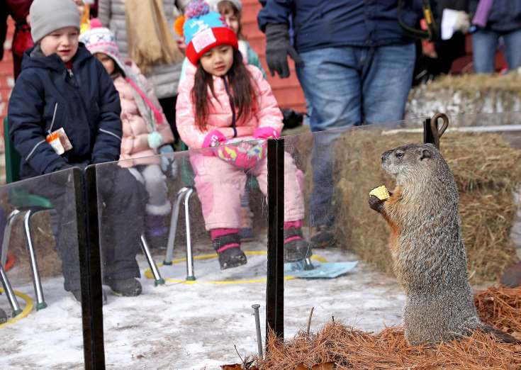 winter prediction groundhog 2018, Groundhog Day 2018: Punxsutawney Phil has seen his shadow