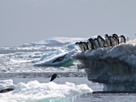 adelie penguins supercolony danger island antarctica, adelie penguins supercolony danger islands antarctica, adelie penguins supercolony danger island antarctica pictures, adelie penguins supercolony danger island antarctica video