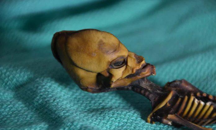 atacama alien skeleton mystery solved, atacama alien skeleton, atacama alien mummy, atacama alien skeleton mystery solved