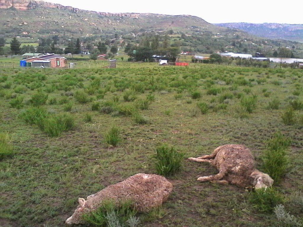 lesotho hailstorm, lesotho hailstorm video and pictures, hailstorm damages Lesotho in March 2018 video, hailstorm damages Lesotho in March 2018 pictures