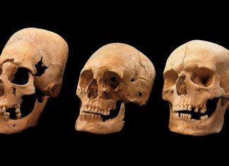 mystery alien elongated skulls bavaria, alien skulls mystery bavaria, mystery alien skulls bavaria, elongated skulls bavaria