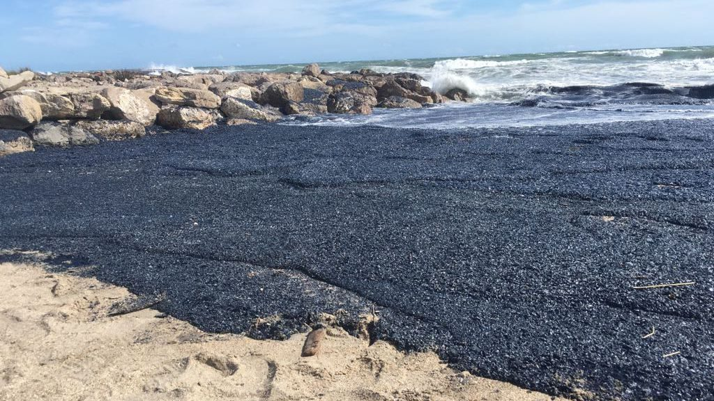 Billions of purple jellyfish-like creatures wash up on beach in Palavas-les-Flots, south of France  Billions-of-purple-jellyfish-like-creatures-wash-up-france-1-1024x576