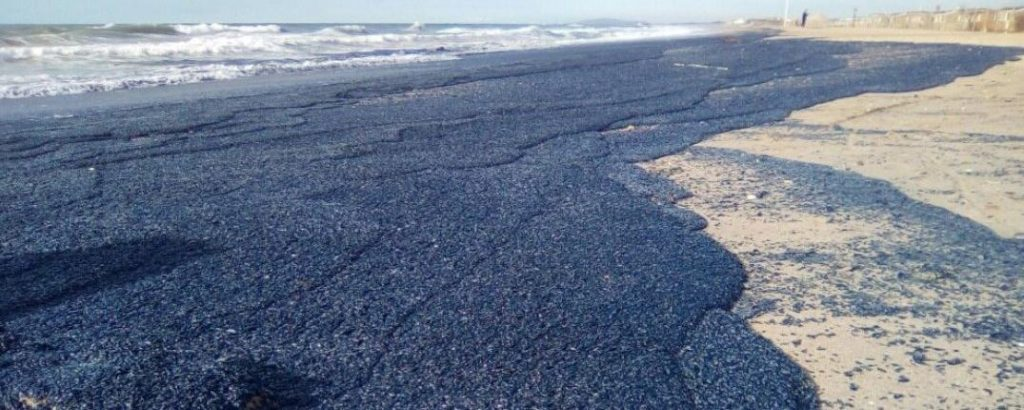 Billions of purple jellyfish-like creatures wash up on beach in Palavas-les-Flots, south of France  Billions-of-purple-jellyfish-like-creatures-wash-up-france-3-1024x410