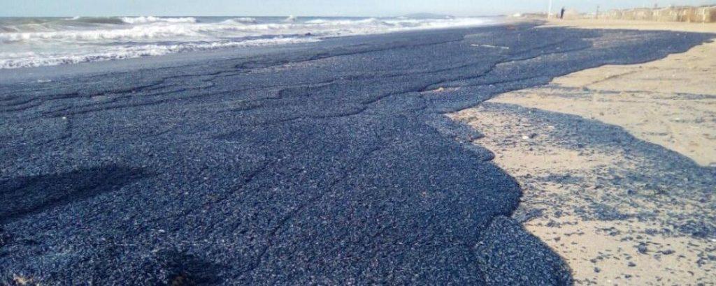 Billions of purple jellyfish like creatures wash up france 3 1024x410 Extraño fenómeno afecto la costa en Francia, millones de medusas cubre toda una playa