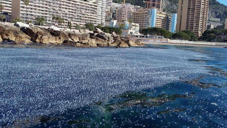 Billions of purple jellyfish like creatures wash up france 5 Extraño fenómeno afecto la costa en Francia, millones de medusas cubre toda una playa