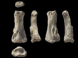 anthropology, finger bone, discovery, human, evolution, april 2018
