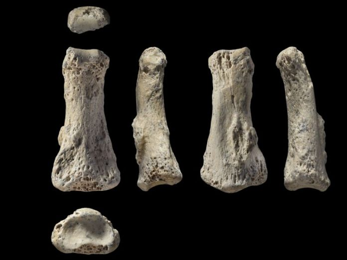 anthropology, finger bone, discovery, human, evolution, april 2018