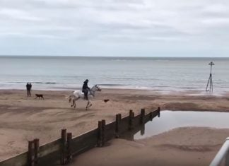 horse backriding beach, horse backriding beach video, Horse And Rider Severely Underestimate The Depth Of A Beach Puddle