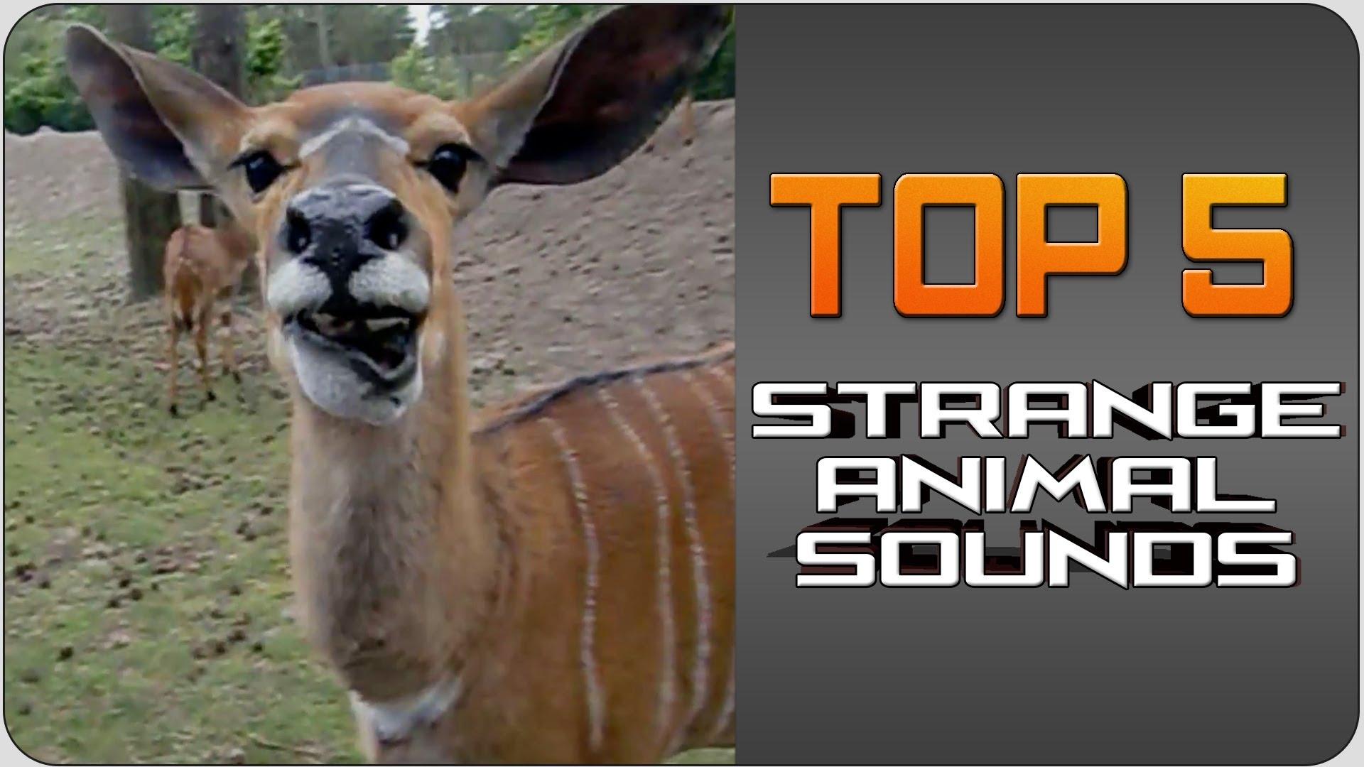 Strange animal sound video - Strange Sounds