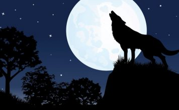 full moon sleep, Can a full Moon really affect your sleep?
