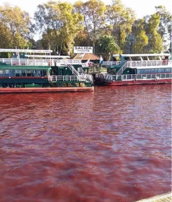river turns blood red tigre buenos aires argentina, tigre rio rojo, tigre river argentina red water, red water tigre argentina