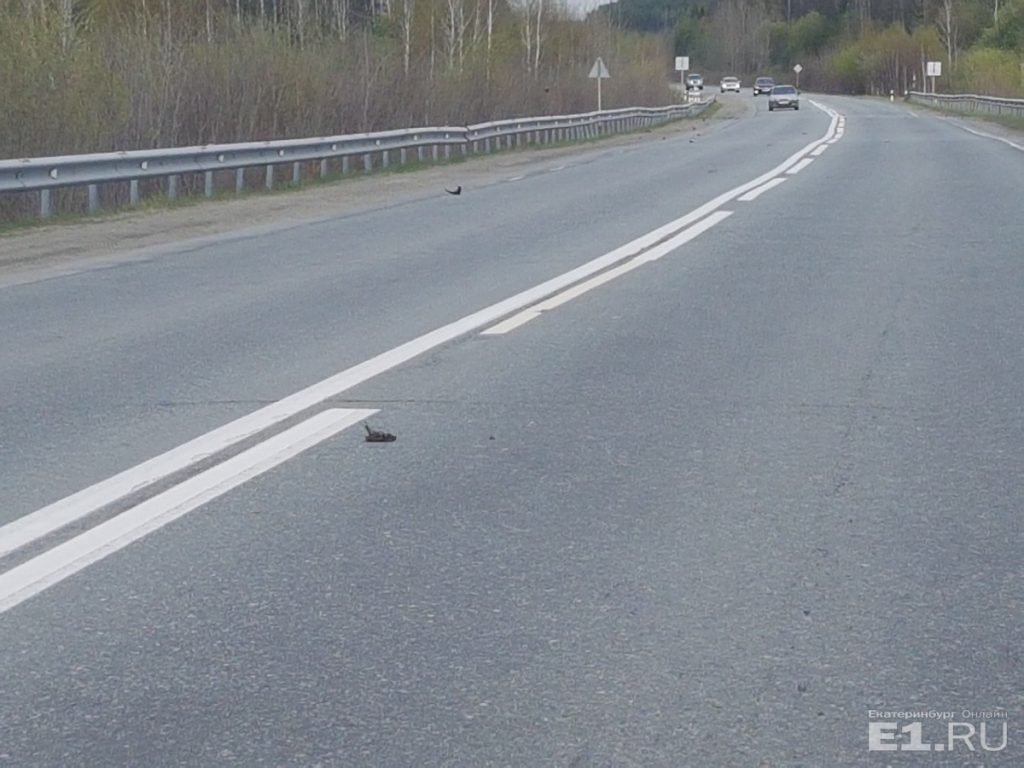 dead birds fall from sky russia, dead birds fall from sky russiapictures, dead birds fall from sky russia june 2018