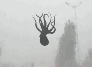 sea creatures fall from sky china, Octopus falls from the sky during a furious storm, sea animals fall from sky china