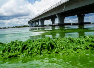 toxic algae bloom usa, map toxic algae bloom usa, toxic algae blooms in the US, Map of reported toxic algae blooms in the US, Map of reported toxic algae blooms in the USA, toxic algae bloom america, toxic algae bloom america waters