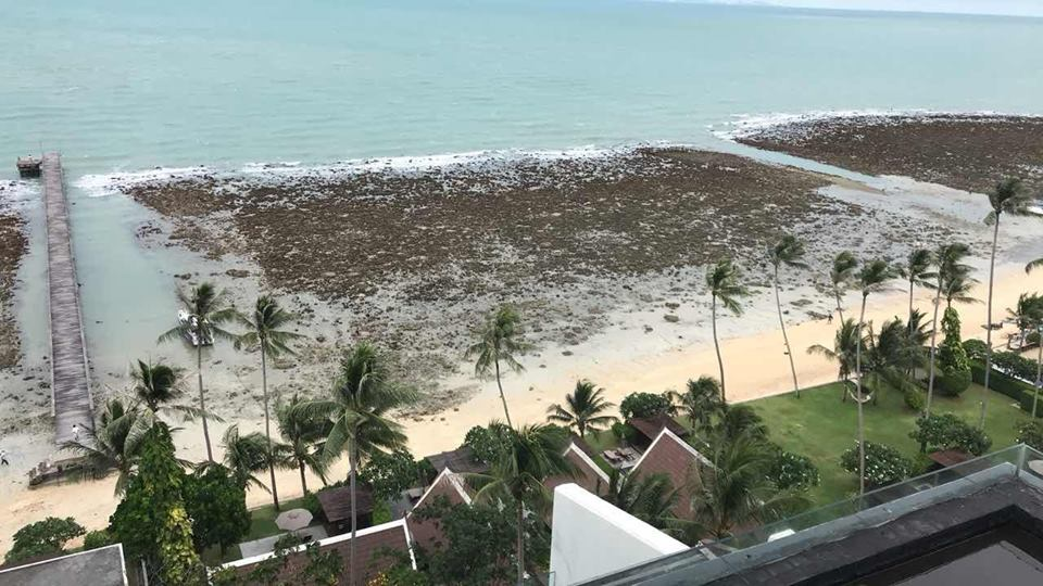 Strong water receding reported in the Gulf of Thailand in June 2018, thailand water disappearance, water disappears in thailand, ocean disappears thailand