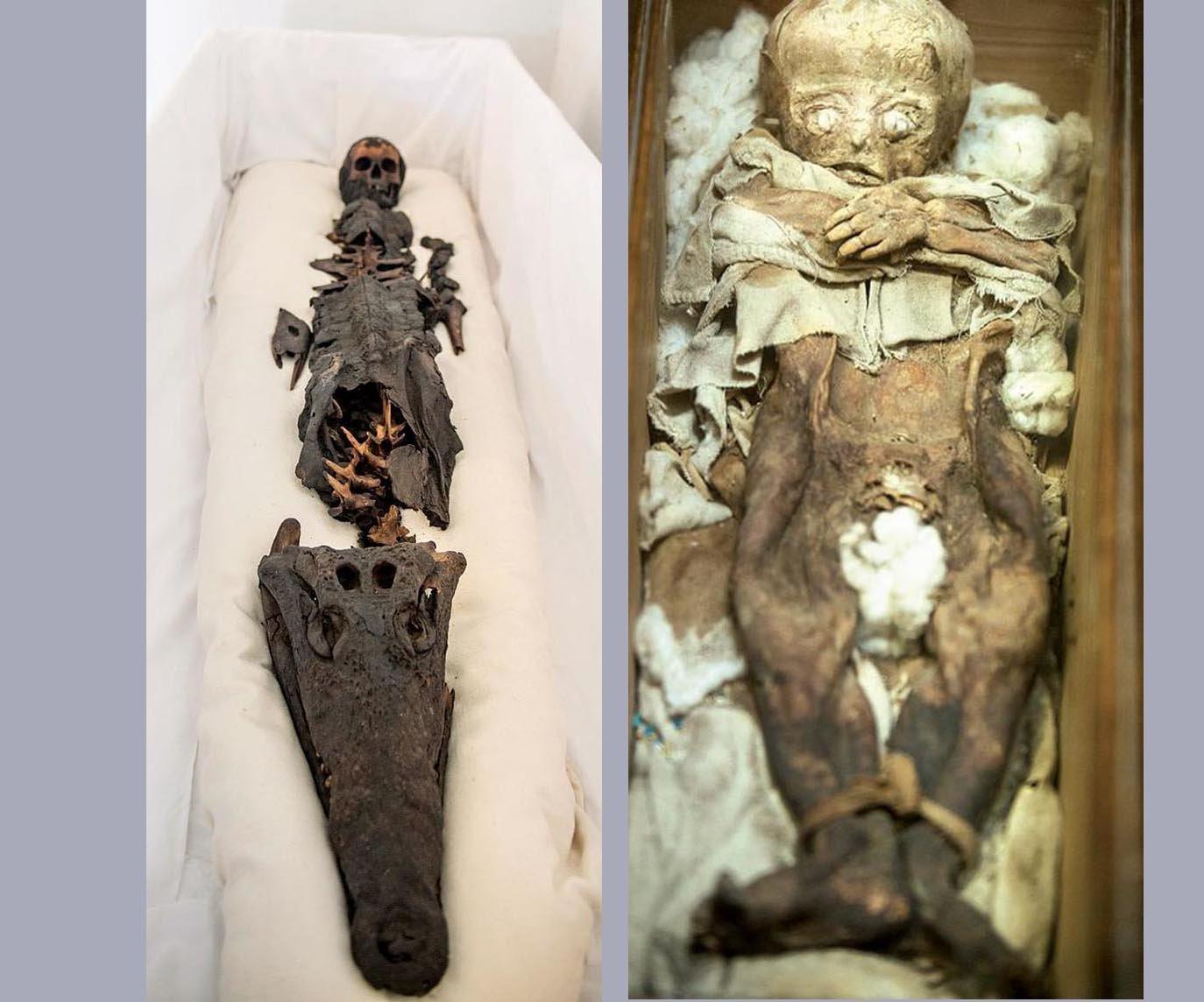 Half princess half crocodile: Two-headed ancient mummy revealed to