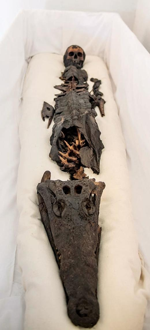 Half princess half crocodile: Two-headed ancient mummy revealed to
