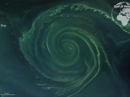 mysterious algae whirlpool baltic sea, mysterious algae whirlpool baltic sea photo, mysterious algae whirlpool baltic sea satellite image