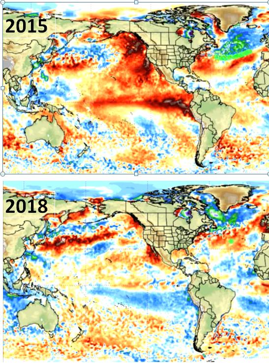 ocean cooling, the ocean is cooling, ocean is cooling not warming