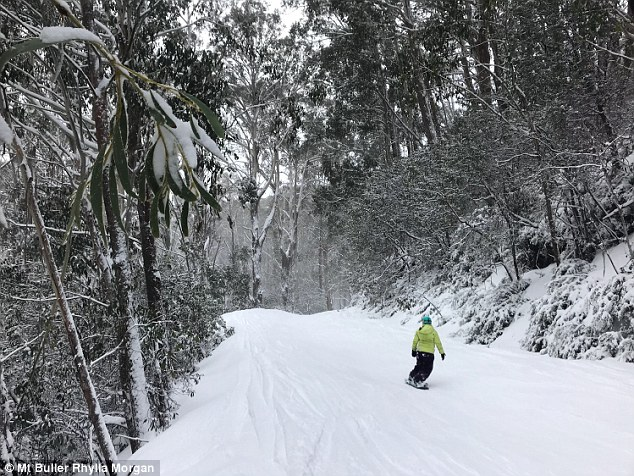 Unprecedented snow Mount Buller Australia, Unprecedented snow Mount Buller Australiapictures, Unprecedented snow Mount Buller Australia video, Unprecedented snow Mount Buller Australia august 18 2018