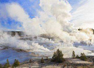 yellowstone toxic gases kill animals, toxic gases kill animals yellowstone, poisonous gases yellowstone