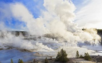 yellowstone toxic gases kill animals, toxic gases kill animals yellowstone, poisonous gases yellowstone