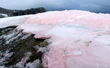 pink snow, pink ice, pink snow greenland, pink snow global change