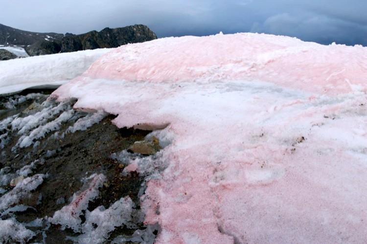 pink snow, pink ice, pink snow greenland, pink snow global change