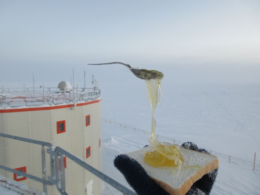 Antarctica frozen honey toast, antarctica frozen meals