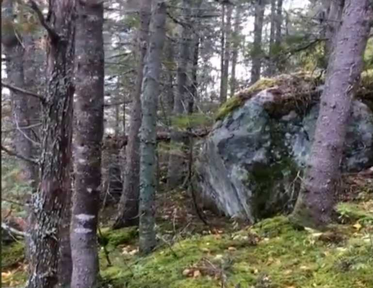 The ground looks like it's breathing in Quebec Forest Breathing-ground-quebec-video
