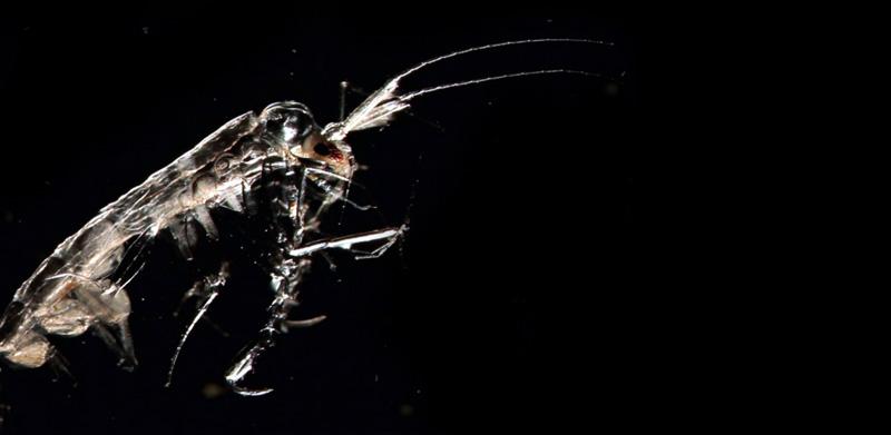 alien parasite ireland, aliens ireland beach, aliens parasites wash up ireland beach