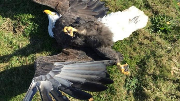 Mysterious mass bird deaths in Hillsboro, Mysterious mass bird deaths in Hillsboro oregon, Mysterious mass bird deaths in Hillsboro video, Mysterious mass bird deaths in Hillsboro pictures, birds drop from the sky dead hillsboro oregon