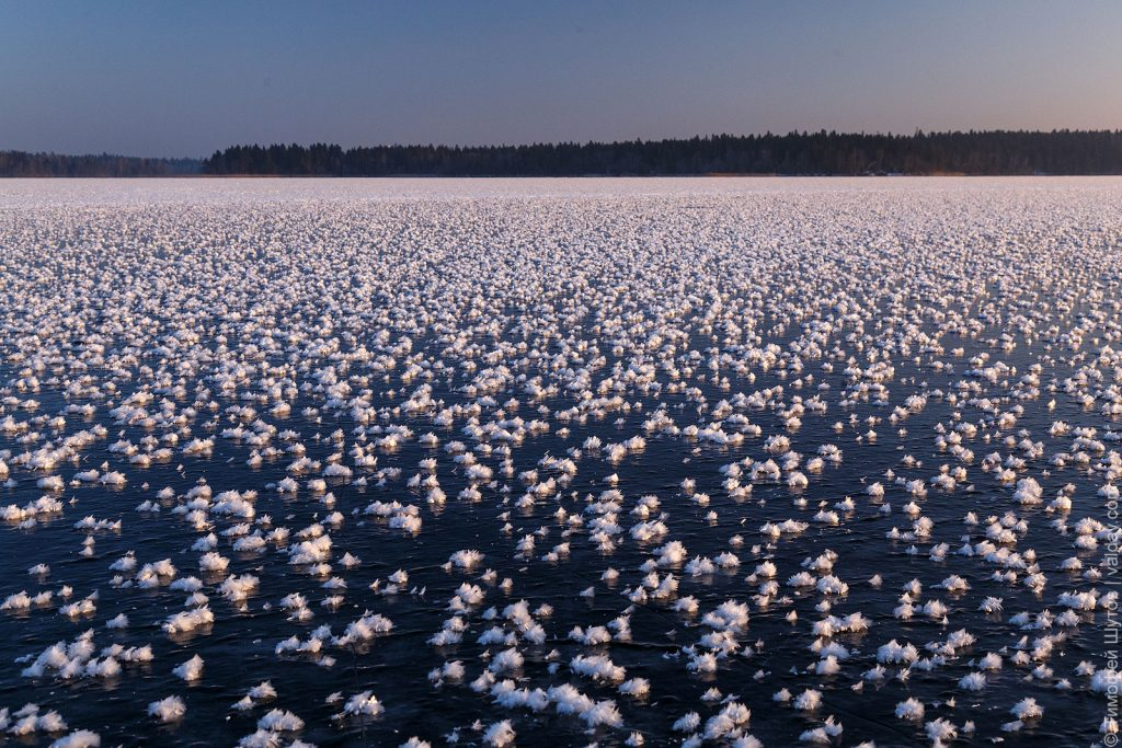 ice flowers russia, ice flowers russia pictures, ice flowers russia video, ice flowers russia december 2018