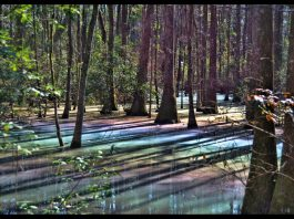 rainbow swamp, rainbow swamp pictures, rainbow swamp video