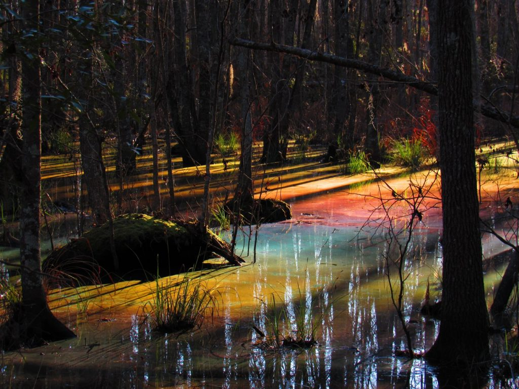 rainbow swamp, rainbow swamp pictures, rainbow swamp phenomenon, colored water, Why this rainbow swamp has got people talking, Natural oils create a rainbow effect in First Landing State Park virginia
