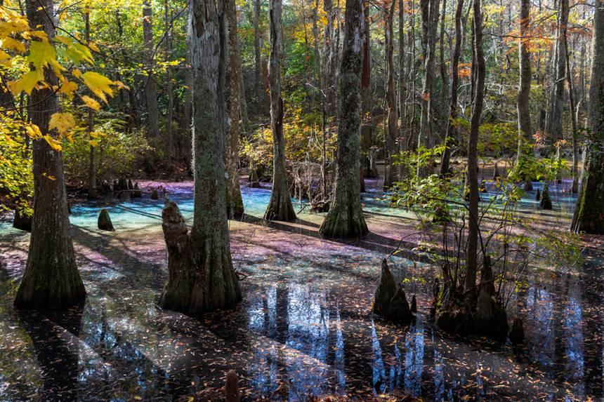 rainbow swamp, rainbow swamp pictures, rainbow swamp video