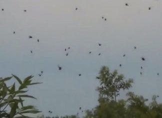 brazil spider rain january 2019, brazil spider rain january 2019 video, brazil spider rain january 2019 picture