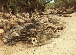 dead wild horses australia heatwave, dead wild horses australia heatwave pictures, australia heatwave mass die-off, australia wild horses death heatwave australia january 2019