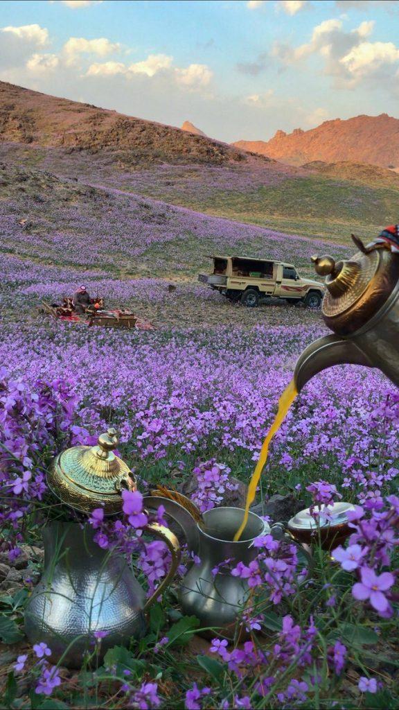 Desert turns purple after impressive desert bloom in arid Saudi Arabia  Desert-bloom-saudi-arabia-flowering-desert-2-576x1024