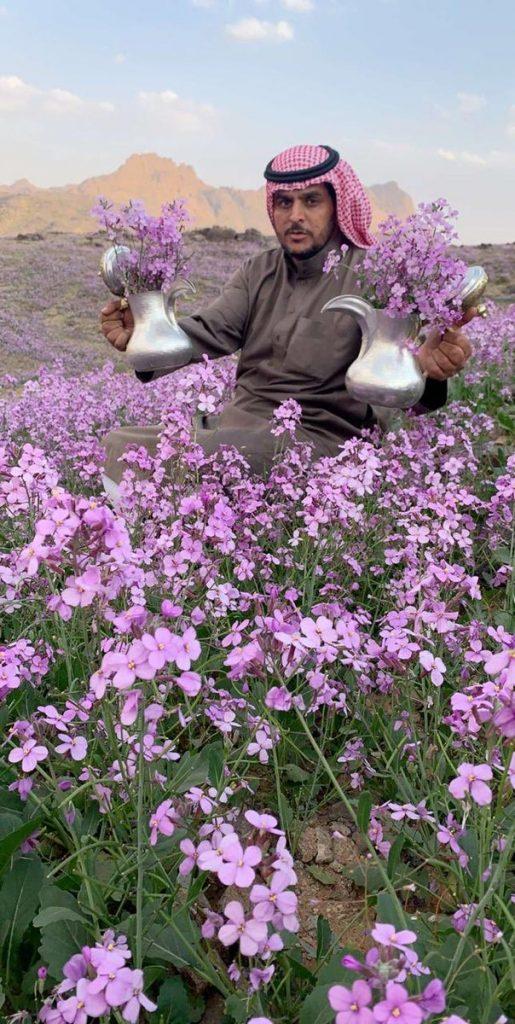 Desert turns purple after impressive desert bloom in arid Saudi Arabia  Desert-bloom-saudi-arabia-flowering-desert-515x1024