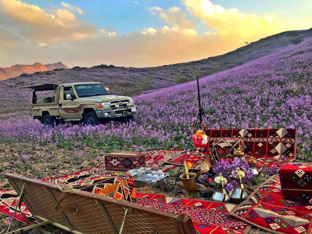Desert turns purple after impressive desert bloom in arid Saudi Arabia  Desert-bloom-saudi-arabia-flowering-desert-7-1024x768