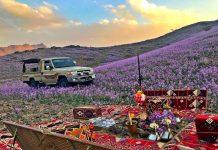 desert bloom saudi arabia flowering desert, desert bloom saudi arabia flowering desert video, desert bloom saudi arabia flowering desert pictures, desert bloom saudi arabia flowering desert january 2019, desert bloom saudi arabia flowering desert december 2018