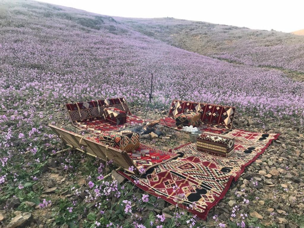 Desert turns purple after impressive desert bloom in arid Saudi Arabia  Desert-bloom-saudi-arabia-flowering-desert-9-1024x768