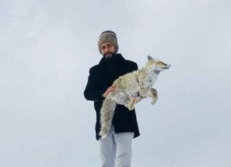 frozen fox turkey, so cold in turkey animal turn dead, Frozen fox found dead in Turkey as a wave of cold temperature engulfed the country in January 2019