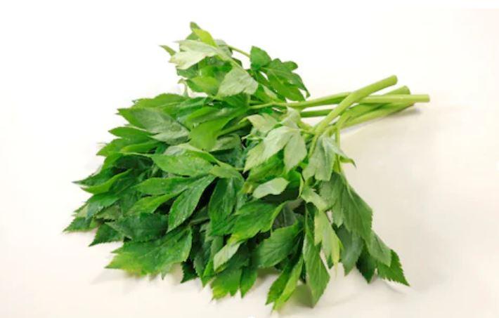 ashitaba plant slow down aging samourai japan, buy ashitaba, buy ashitaba plant