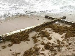 cross florida, cross florida beach fort lauderdale, cross florida beach fort lauderdale february 2019, cross florida beach fort lauderdale video, cross florida beach fort lauderdale picture